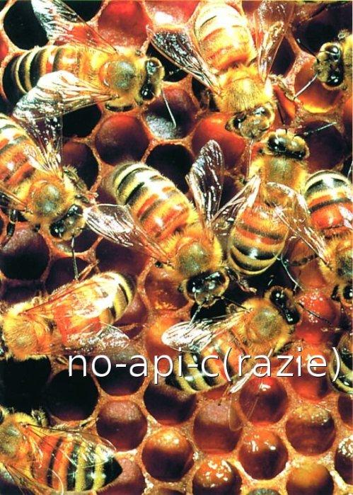 Non tutti vogliono api(c)...